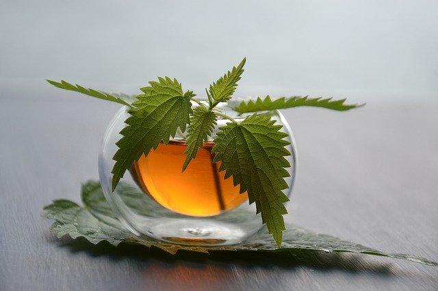 Kopřiva: skvělá na čaj i domácí špenát