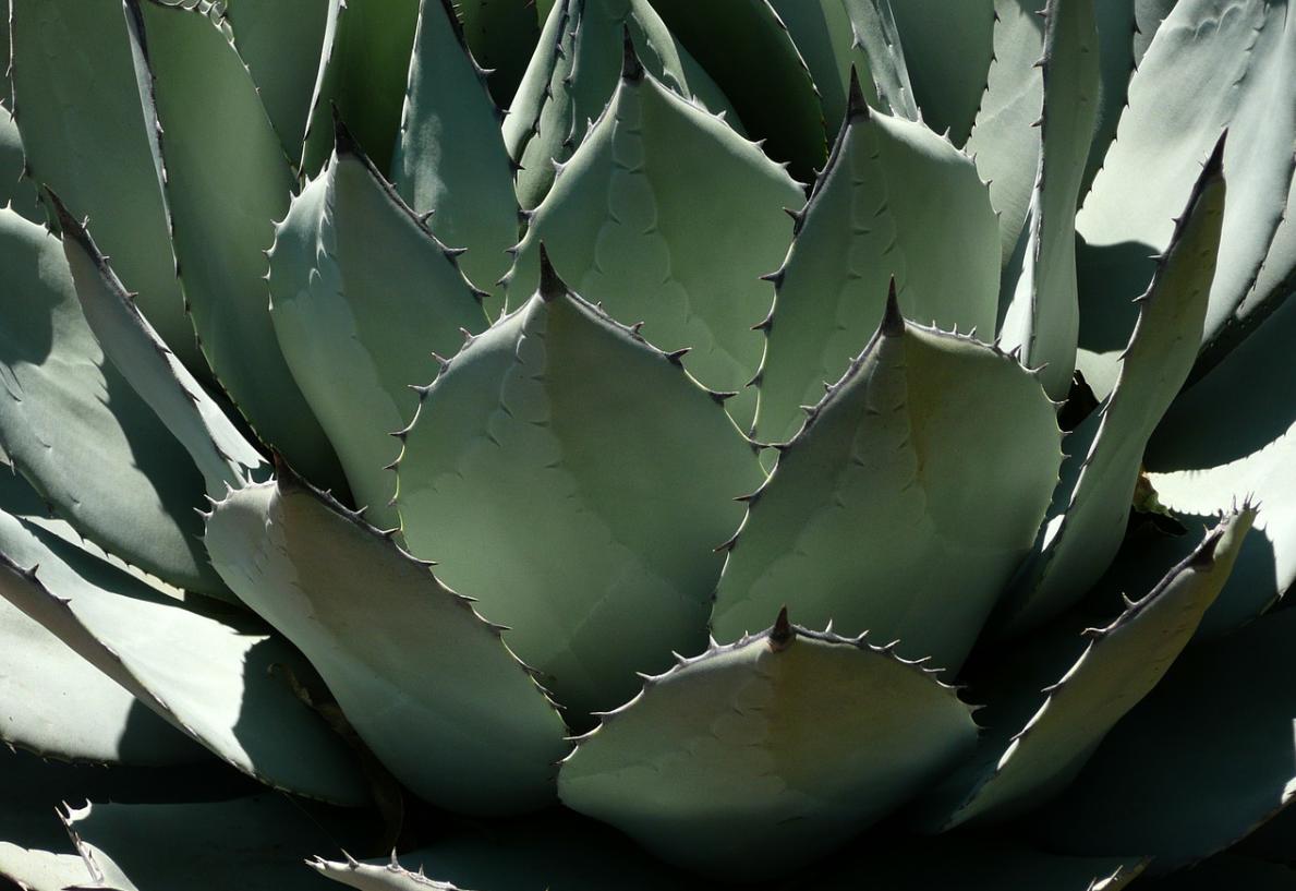 Dejte si kaktus